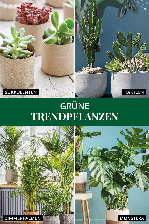 Grune Trendpflanzen In 2021 Pflanzen Sukkulenten Grun
