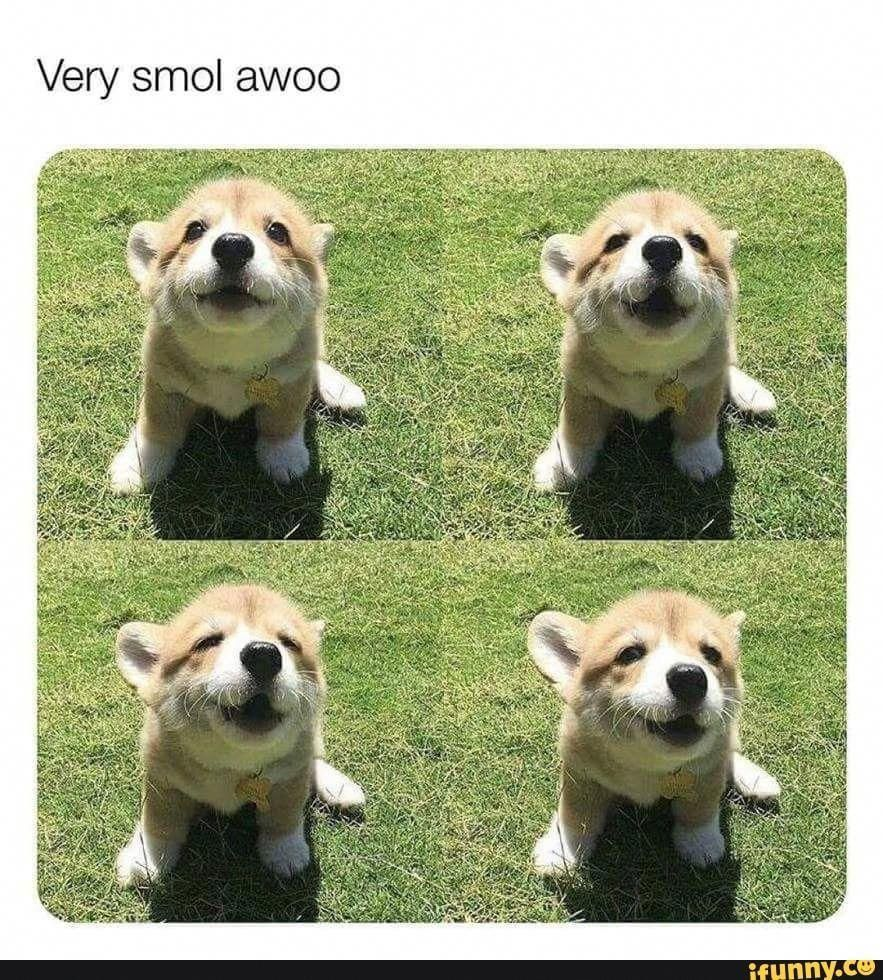 Acquire Wonderful Suggestions On Cute Dogs They Are Actually