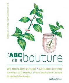 comment bouturer vivaces arbustes et autres plantes multiplications plantes. Black Bedroom Furniture Sets. Home Design Ideas