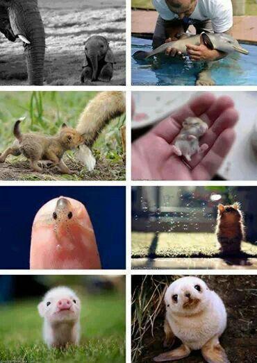 Aaahhhh babies!!!! Cute baby animals, Baby animals
