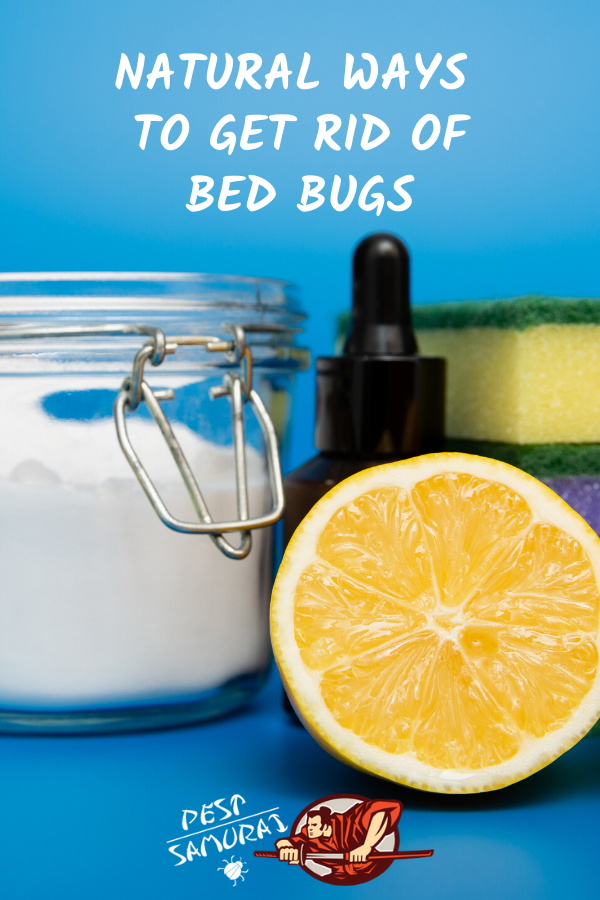 Natural Ways to Get Rid of Bed Bugs A Complete Guide