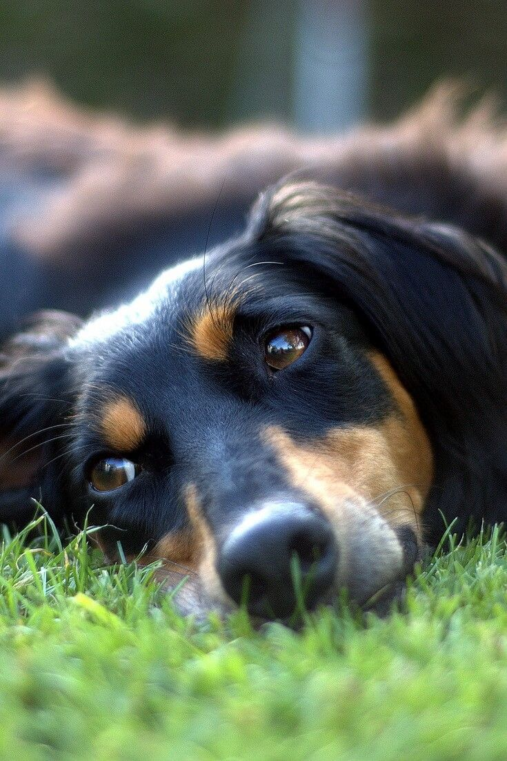 How to Stop your Dog from Peeing on his Front Legs? (With