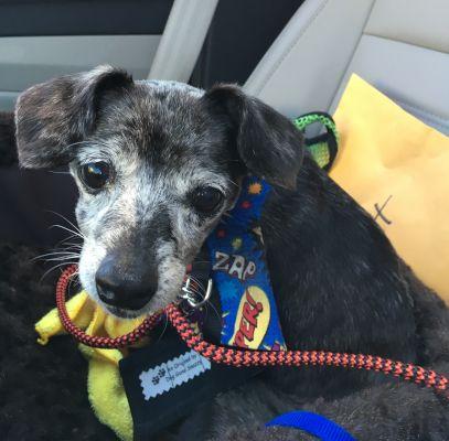 Adopt Mookie On Petfinder Dog Adoption Adoption Pet Adoption