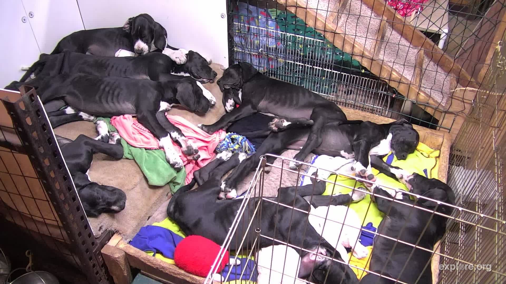I'm watching the Indoor Puppy Room live cam on explore