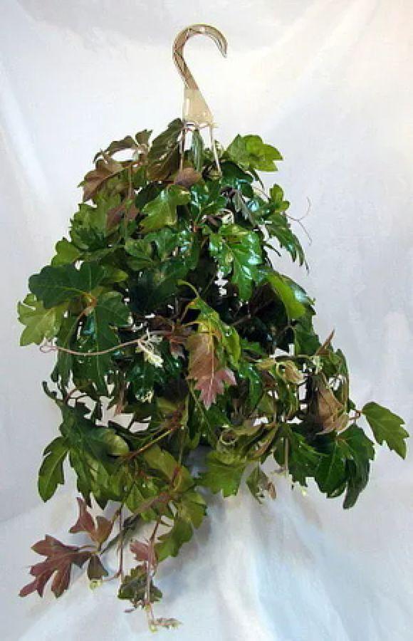 Zimmerpflanzen Schatten pin aaron cohick auf beauitful houses garden
