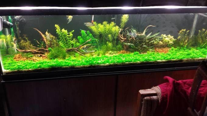 The 25 best 125 gallon aquarium ideas on pinterest tank for 125 gallon fish tank