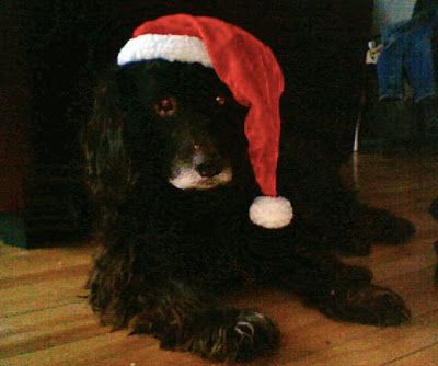 Dog Blog Xmas Christmas Santa Helper Cute Puppy