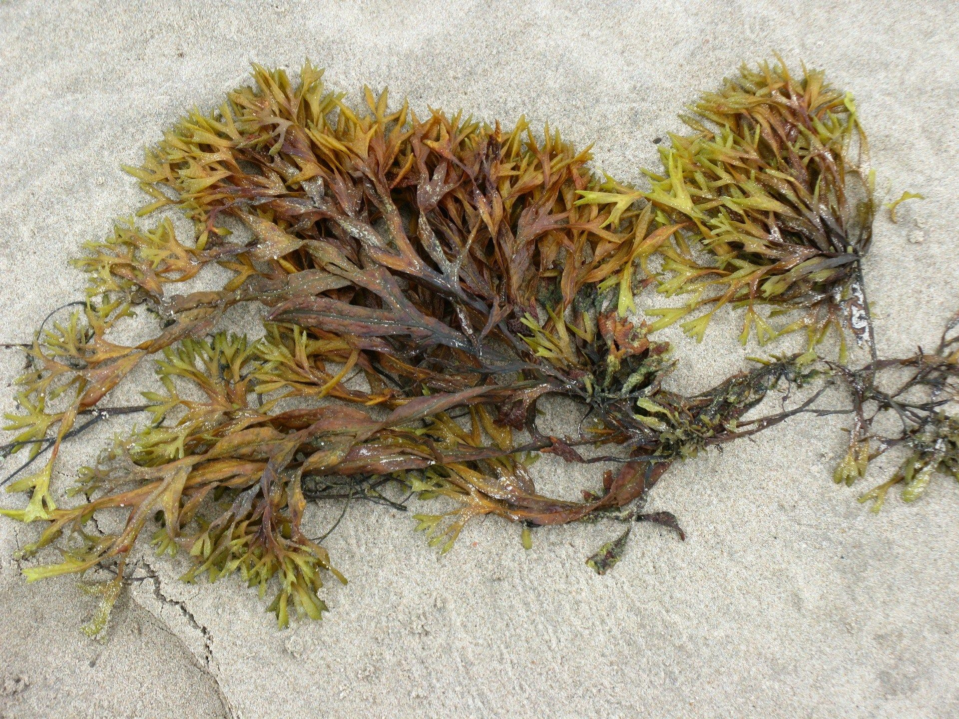 Setting Up A Seaweed Business Jane S Story Seaweed Iodine
