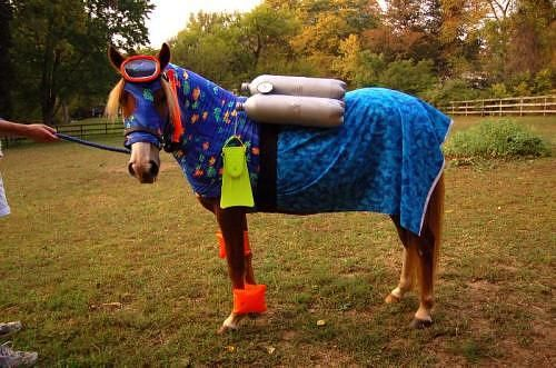 He's a SEA HORSE...get it?!?!?    #horse #halloween