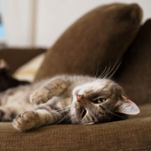 How to Get Cat Smell Out of Couch | Cats smelling, Cat ...
