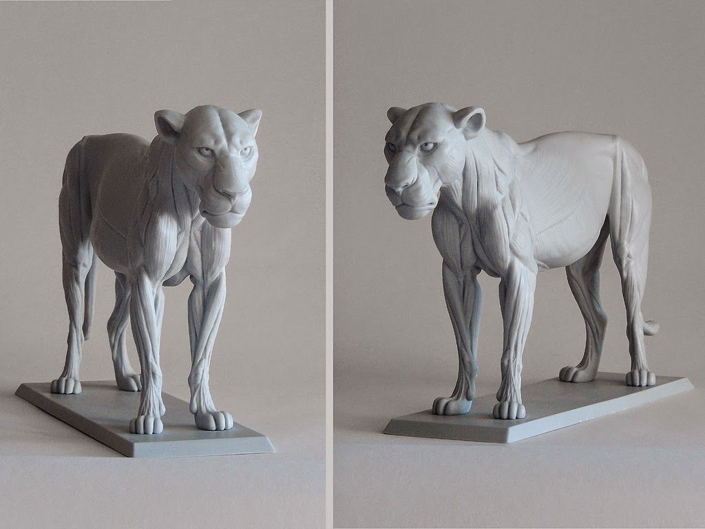 Hi There Ive Been Working On A Big Cat Anatomy Sculpture For A Few