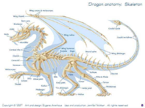 Dragon Skeletal Structure | Creature Anatomy Reference | Pinterest ...