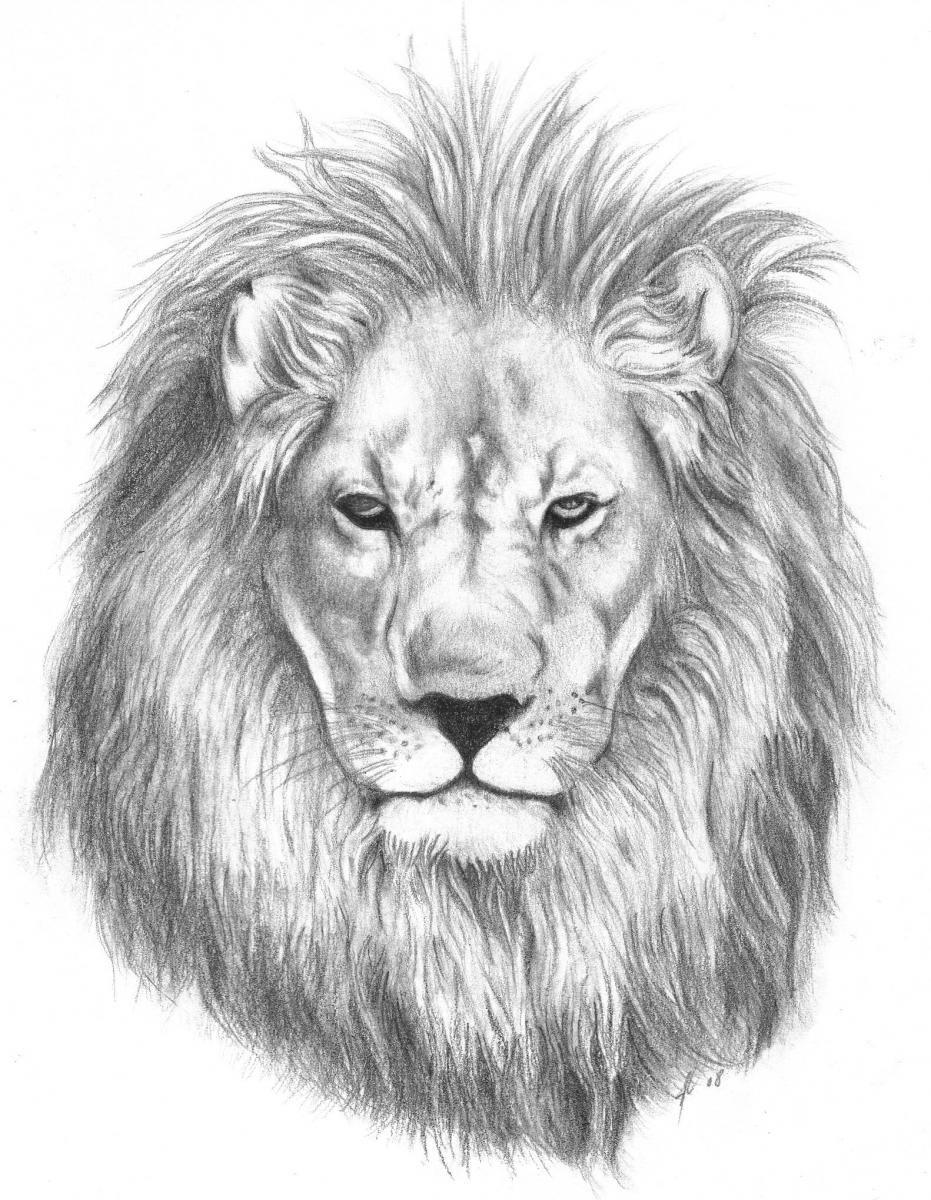 lion head vevtor - Pes...