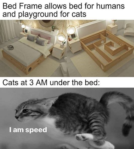 Dance Away To Another Caturday (46 Cat Memes)