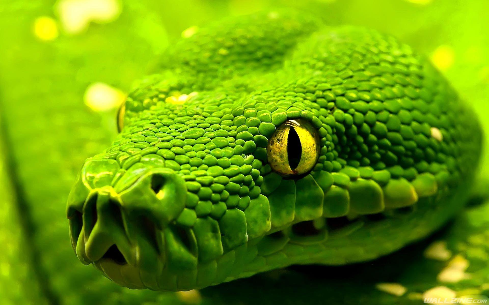 Great Snake Wallpaper