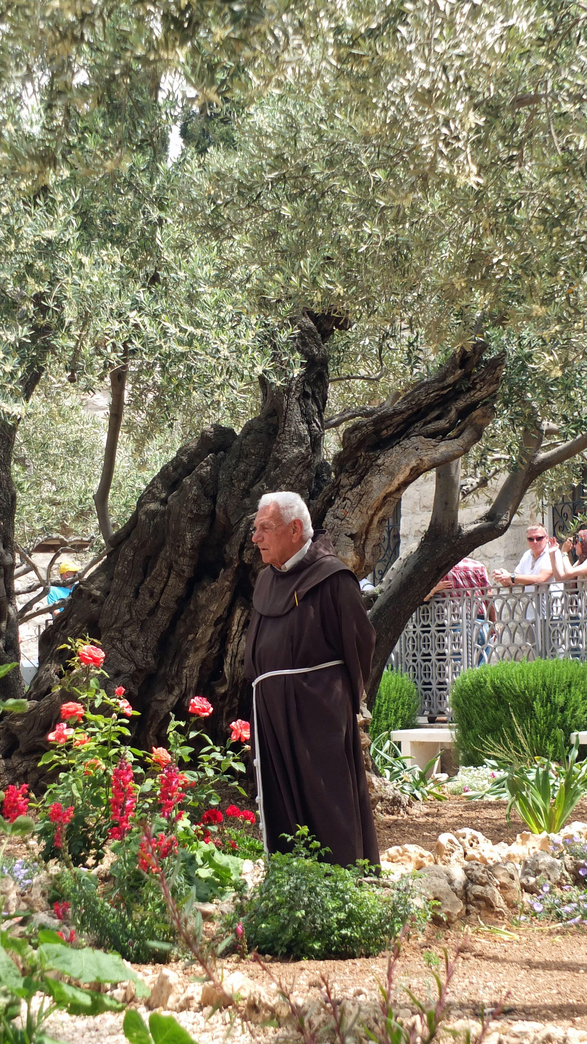 Garten Von Gethsemane Garten Gethsemane Israel Reise Studienreisen