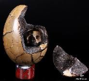 "Amazing 5.0"" Dragon Septarian Stone Carved Crystal Egg with Skull Druse, Sculpture"