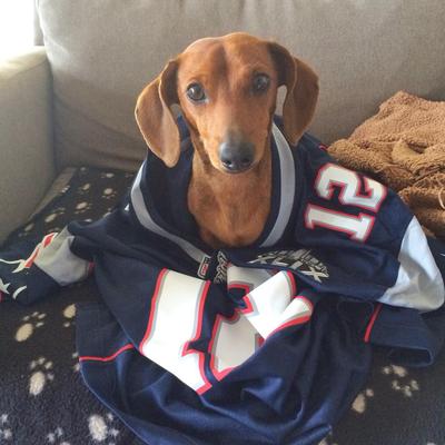 tom brady jersey for dog