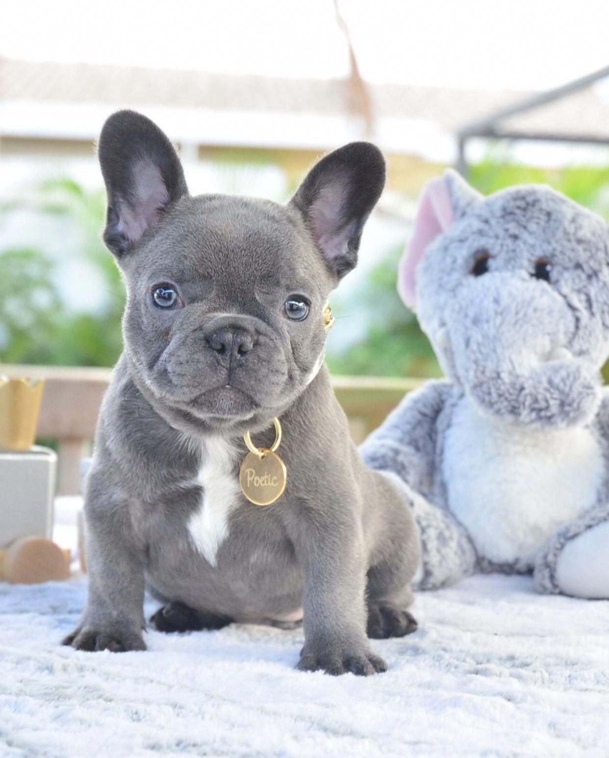 (notitle) FrenchBulldogscare FrenchBulldogsproducts