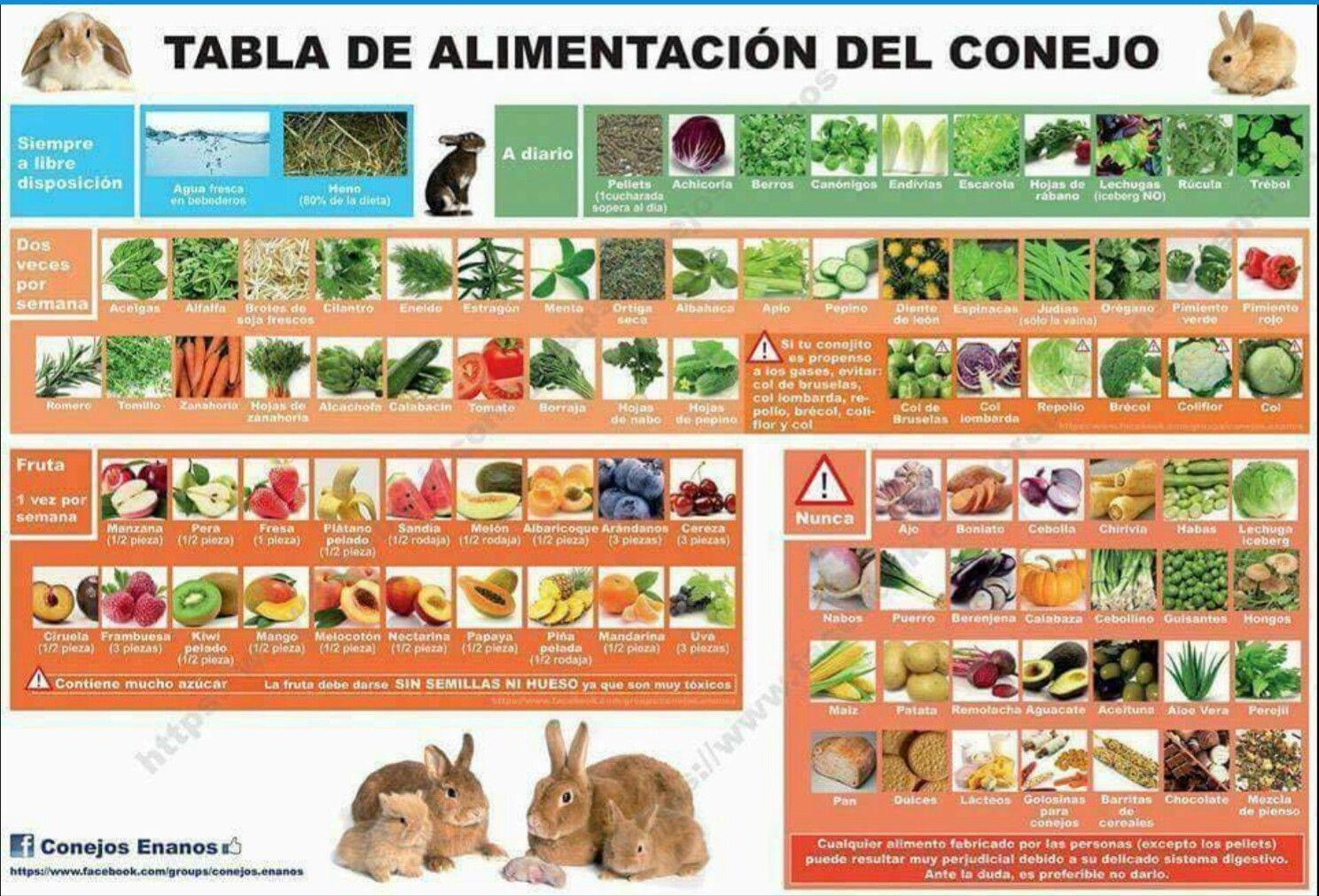Pin En Conejo