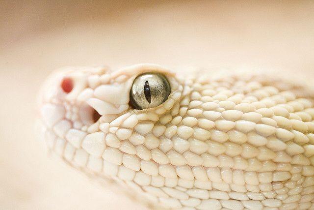 She Had Those Certain Kind Of Rattlesnake Eyes Snake Wallpaper Reptiles Snake