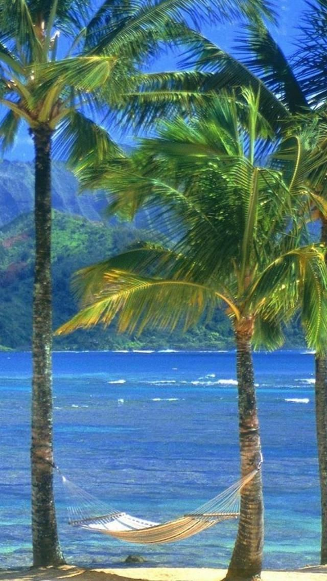 Palm-Trees-Sea-Kauai-Beach-1136x640.jpg 640×1,136 pixels