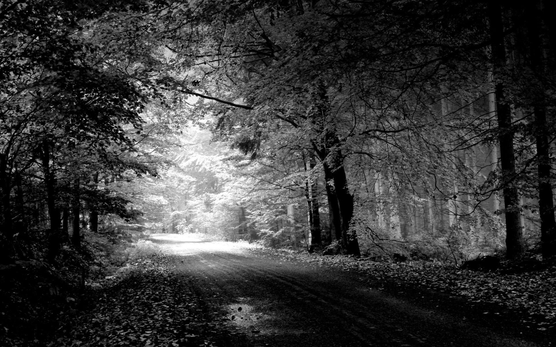 Black In White Nature Hd Wallpapers For Your Desktop Free Download Beautiful Roads Forest Road Beautiful Nature