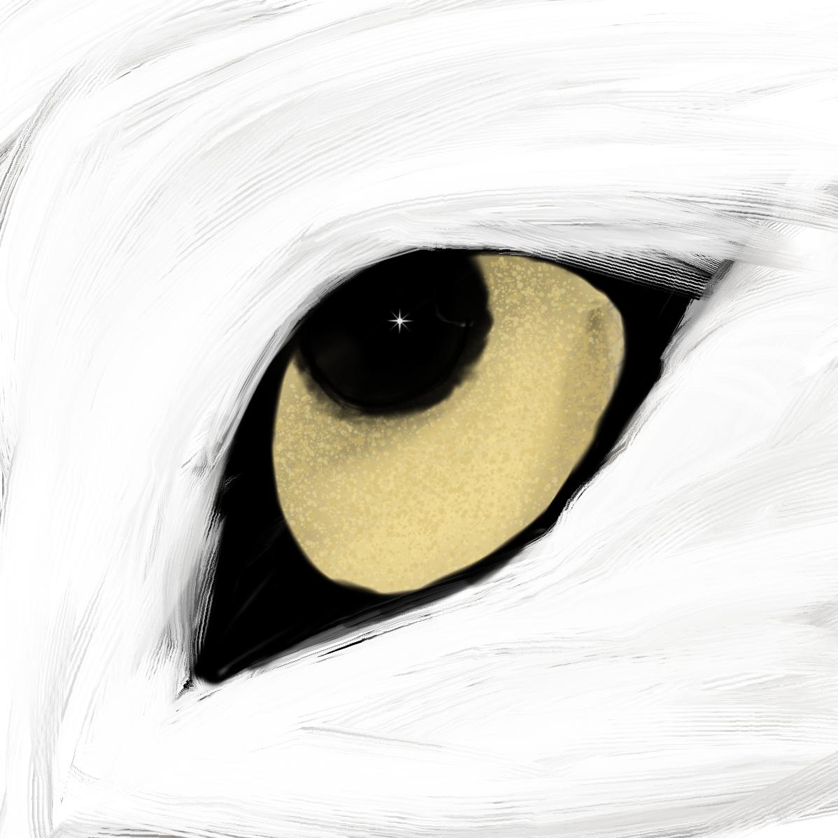 Wolf S Eye Wolf Eyes My Drawings Eyes