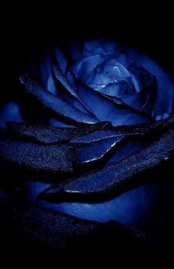 blue roses wallpaper blue aesthetic blue wallpapers