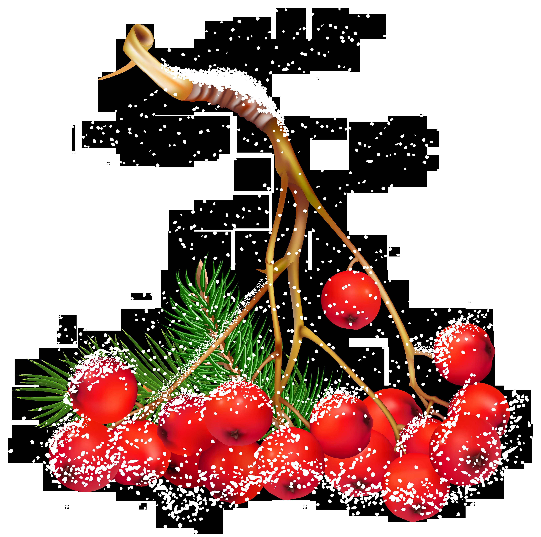 Transparent Christmas Snowy Holly Berries Png Clipart Rozhdestvenskie Cvety Letnie Podelki Dlya Detej Letnie Podelki