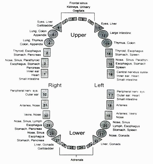Tooth Meridian Chart Shows The Body Of Each Health Your Teeth Affects Every Part