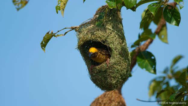 16 Most Astonishing Birds Nest Built By Birds Scoopify Haliaeetus Leucocephalus Birds Beautiful Flowers Images