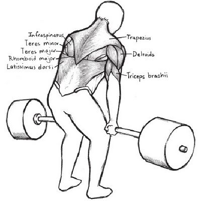Starting Strength Deadlift Chapter (3rd Edition | Strength and Gym