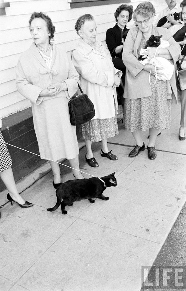 Black Cat Auditions in Hollywood (1961) Fluffy black cat