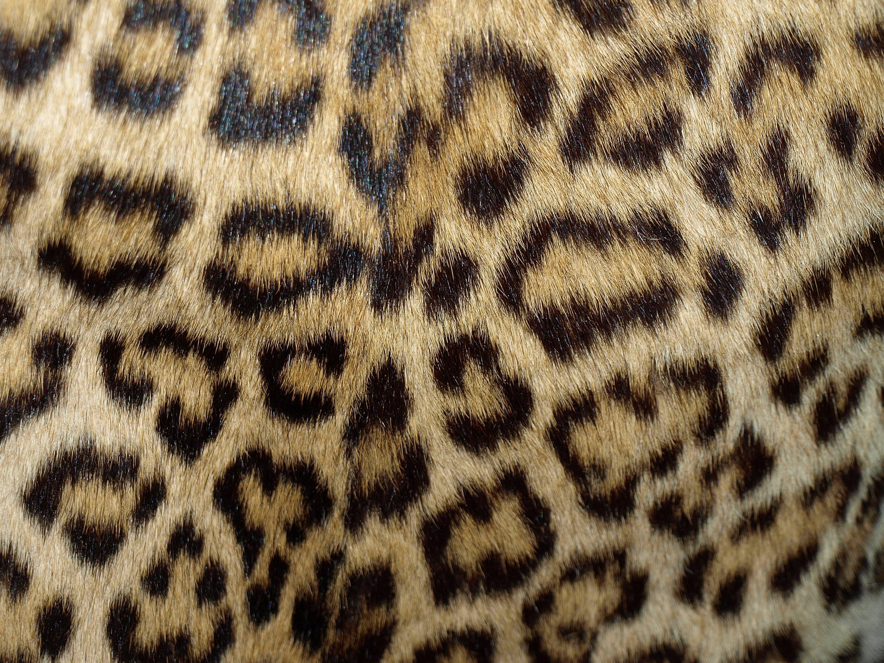 Leopard 2 wallpaper background hd wallpapers pinterest for Leopard print wallpaper