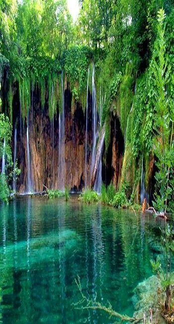 """Il Parco nazionale Garajonay a  La Gomera è  dichiarato dall'UNESCO """" Patrimonio dell'Umanità"""" nel 1986."""