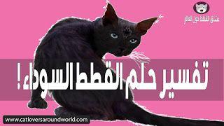 تفسير حلم القطة السوداء أو القط الأسود بالتفصيل المفيد Cats Black Cat Pandora Screenshot
