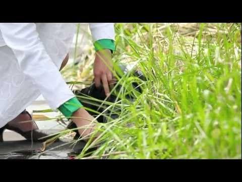 Energia elétrica gerada por plantas carrega até bateria de smartphone — EcoDesenvolvimento.org: Sustentabilidade, Meio Ambiente, Economia, Sociedade e Mudanças Climáticas