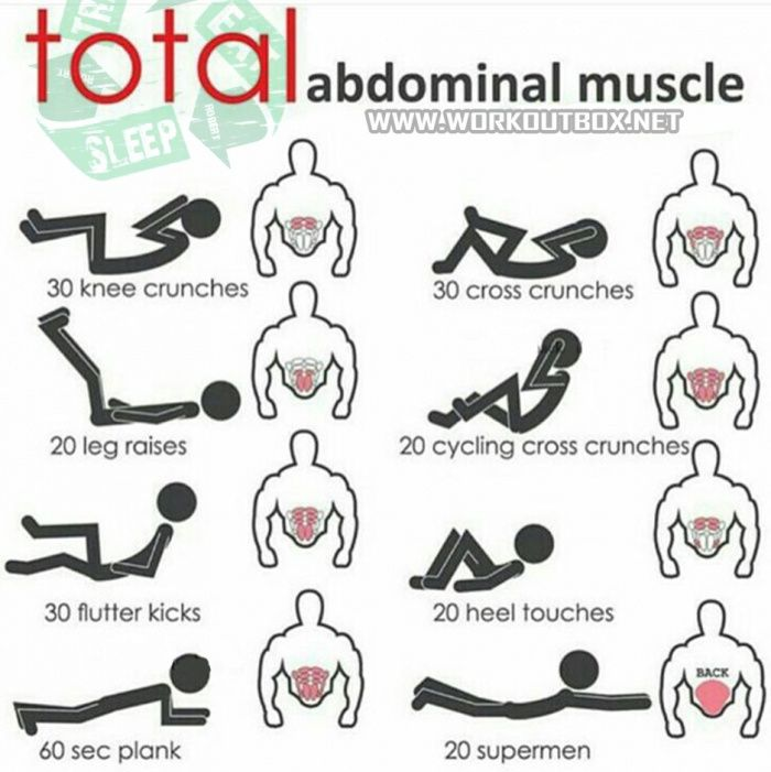 Total Abdominal Muscle - Sixpack Training Workout Plan Abs ...