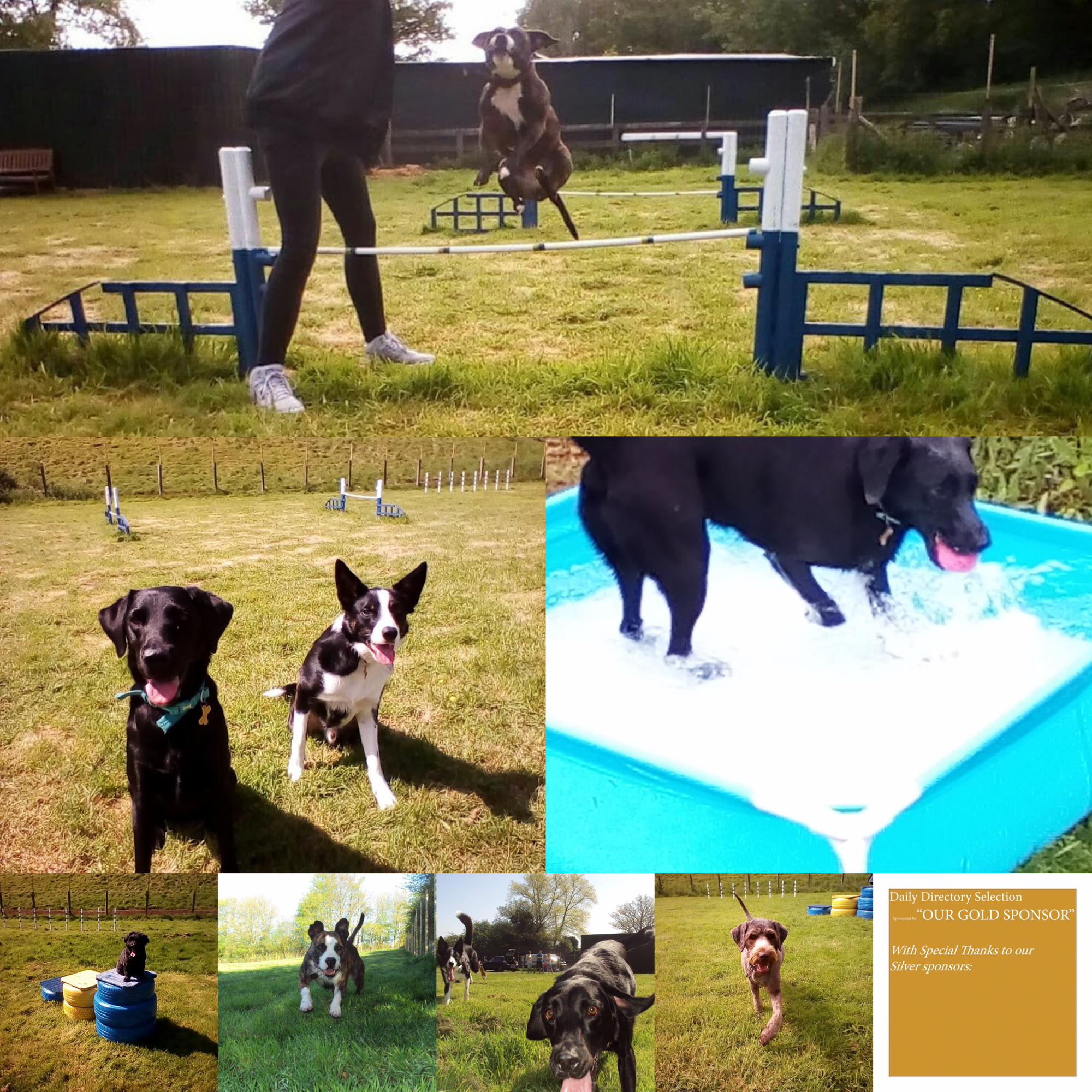 Waggy Walks Brabourne Private Field Hire Granary Court Buildings Granary Court Road Smeeth Kent Tn25 6re Https Www Fa Dog Play Area Dog Walking Dogs