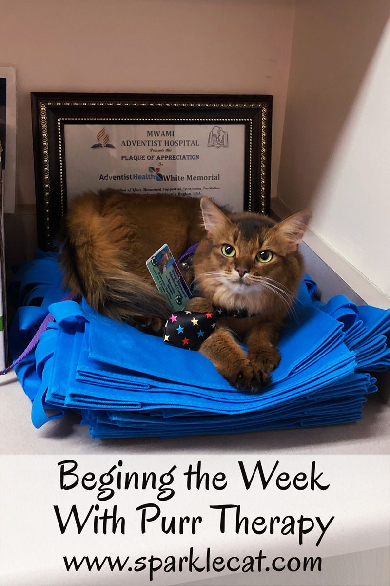 Beginning The Week With Purr Therapy Therapy Cat Clever Animals Cat Model