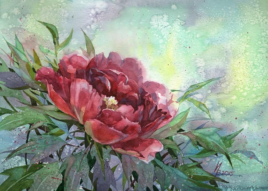 Dark Red Peony Flower by Ina Petrashkevich