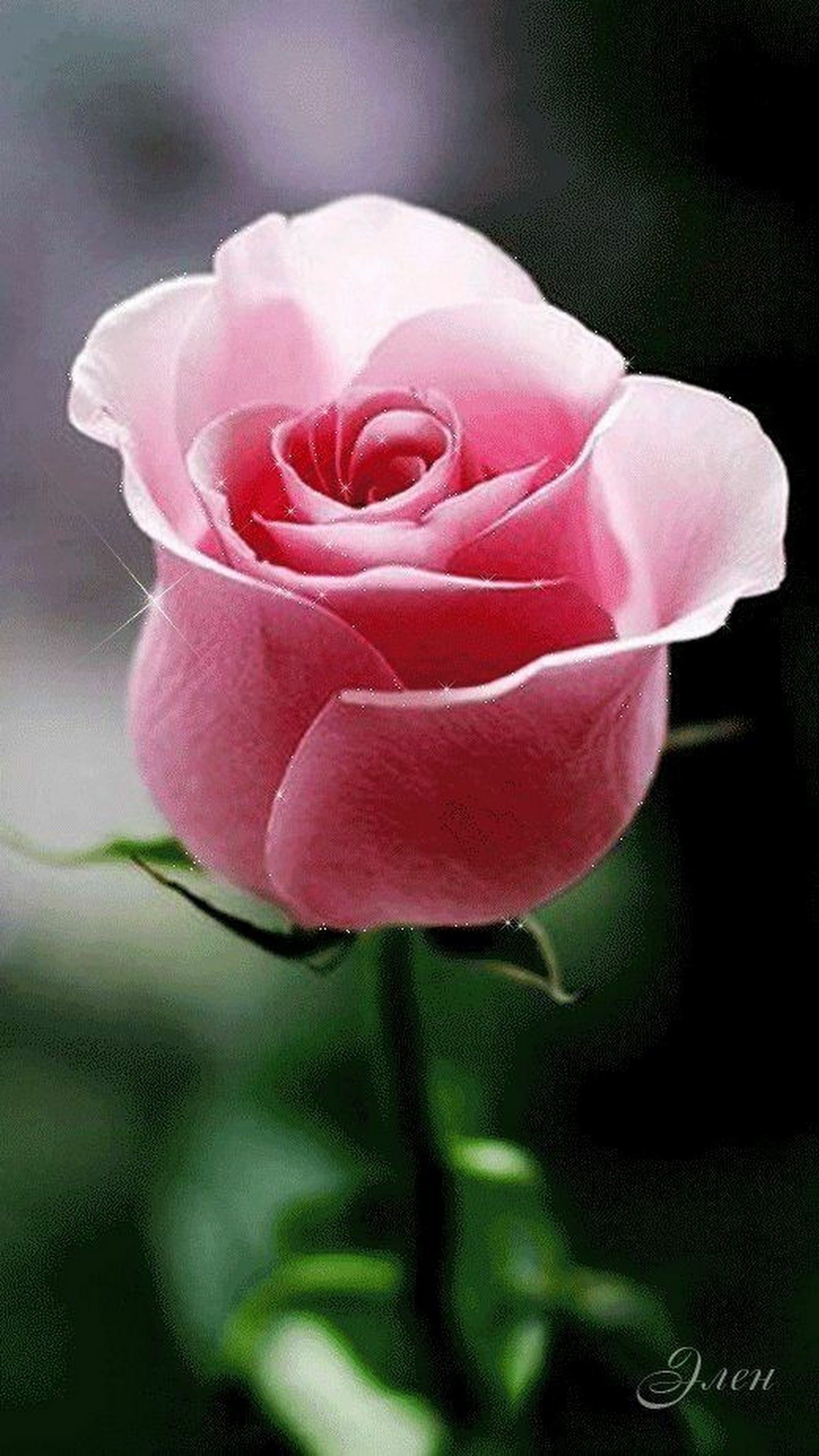 Pink Pretty Pink Flower Pictures Pinterest Beautiful Flowers
