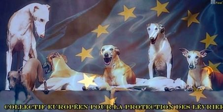 Petition: A pet status for greyhounds in Europe