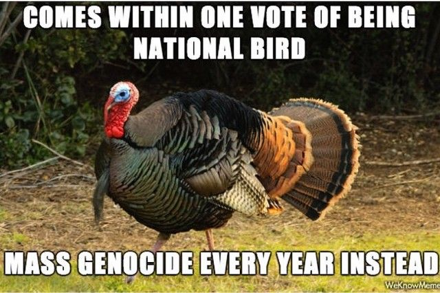 The Turkey Sure Got The Wrong End Of The Stick On How The Bird Is Celebrated Funny Thanksgiving Memes Thanksgiving Meme Funny Thanksgiving
