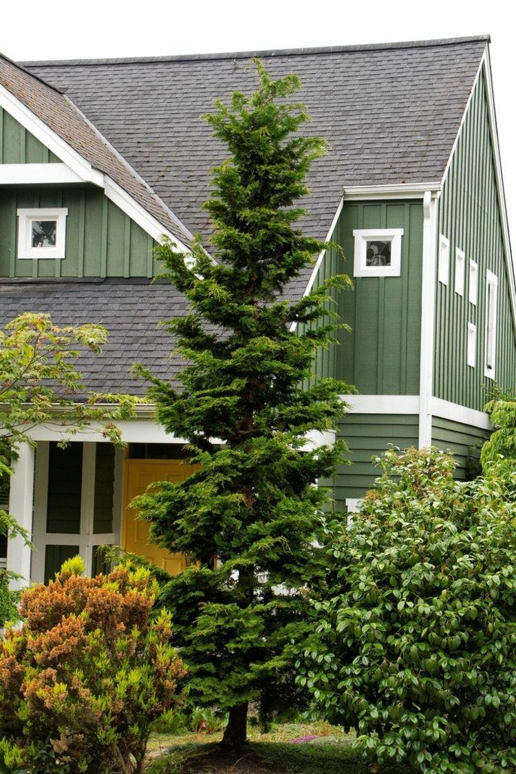 Immergrüne Bäume für den Garten wachsen oft säulenförmig