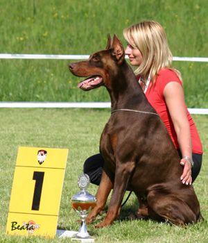 Esprito Val Di Taro Hungary Doberman Pincher Dog Doberman