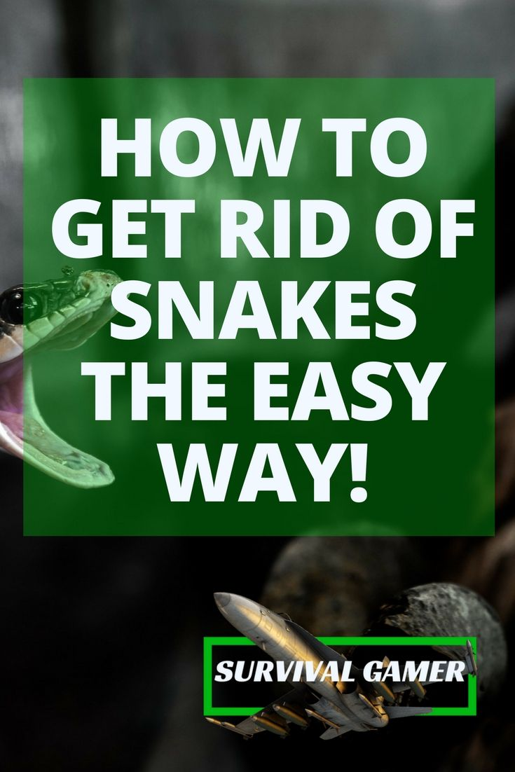 how to get rid of snakes the easy way | How to get rid ...