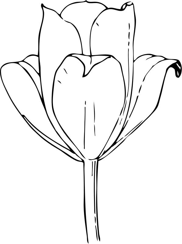 flores para colorear | flores para colorear 2 flores para colorear 3 ...