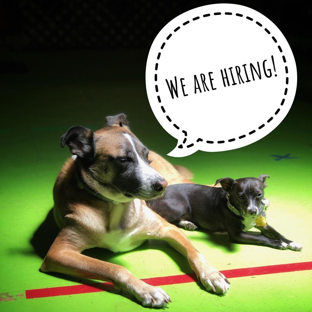 Dan Perata Training Is Hiring We Are Looking For Dog Handlers And
